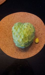 Custard Apple May 2014