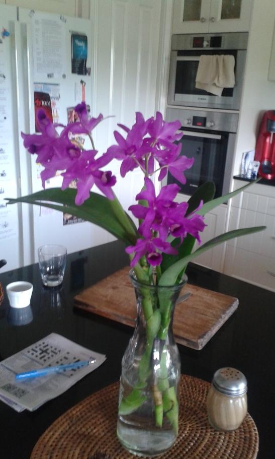 OrchidsFeb2016